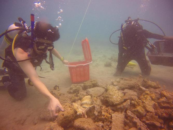 Header coral nursery 1