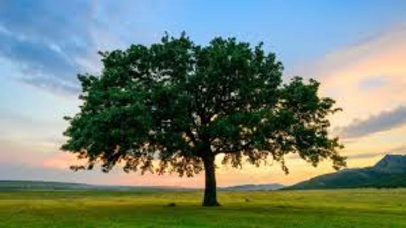 Header trees